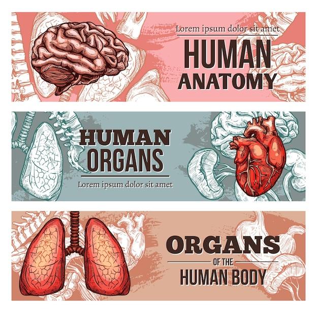 Banners de órgãos do corpo humano com esboço de cérebro, pulmões, coluna vertebral e coração com rins