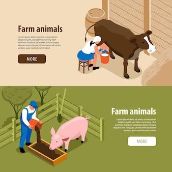 Banners de web isométricos horizontais de animais de criação de gado com trabalhadores ordenhando vaca alimentando porcos
