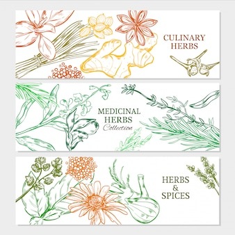 Banners horizontais de plantas naturais saudáveis