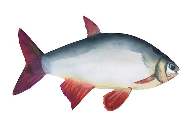 Barata de rio peixe isolada