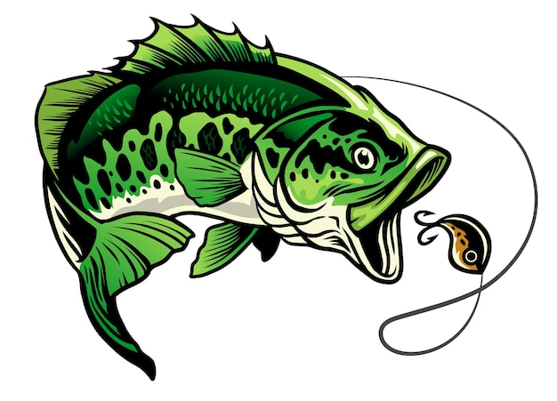 Bass fish catando a isca de pesca