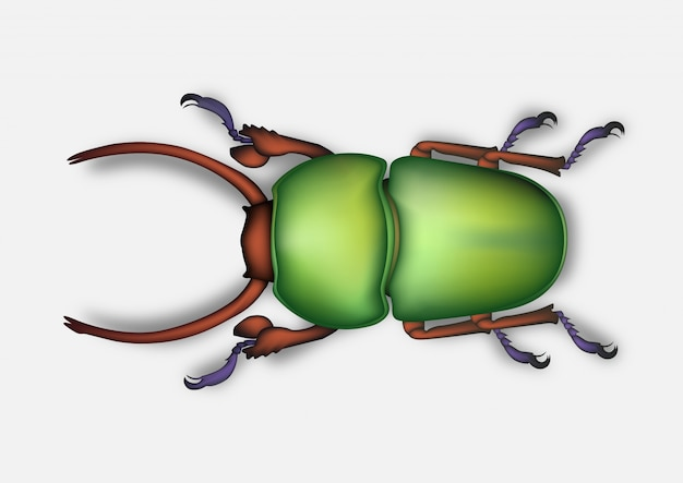 Beetle drawing realistic