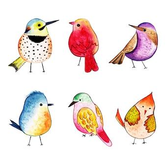 Bela aquarela exótica coleção de aves