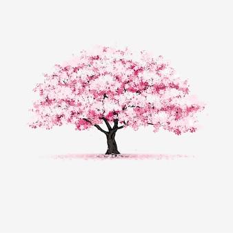 Bela árvore de flor de cerejeira isolada no fundo branco.