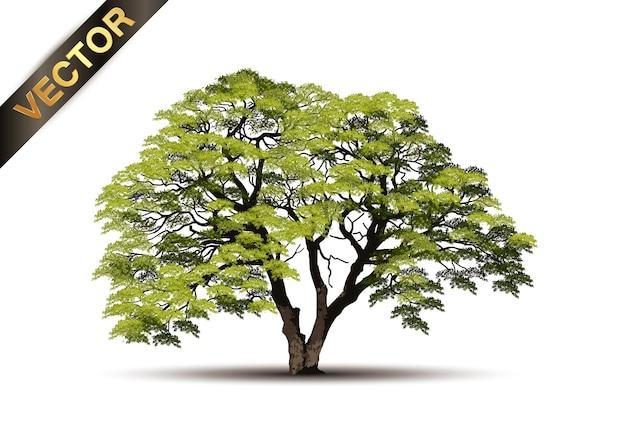 Bela árvore realista sobre um fundo branco