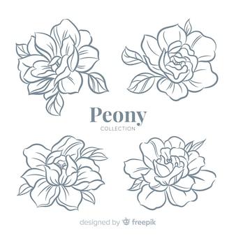 Bela coleção de flores de peônia na mão desenhada estilo