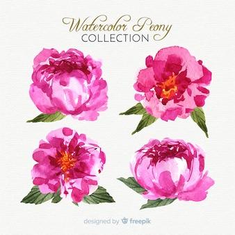 Bela coleção de flores de peônia