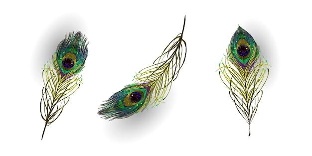 Bela coleção de penas de pavão realista de vetor