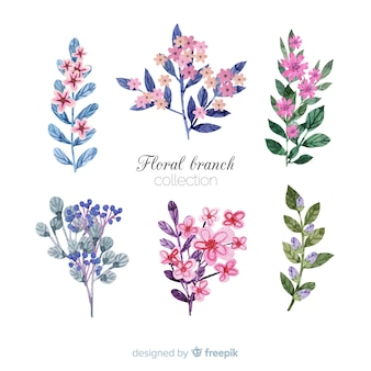 Bela coleção floral ramo aquarela