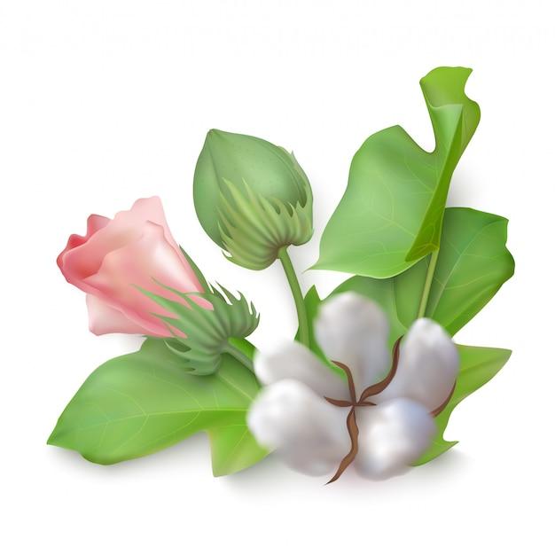 Bela composição de flores de vetor de algodão isolada em um fundo branco.