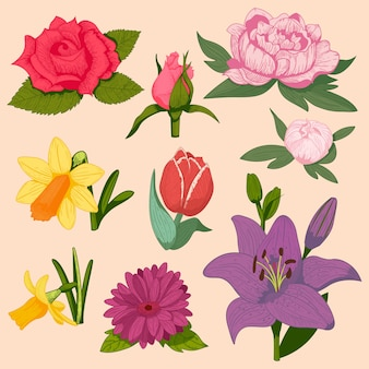 Bela flor aquarela conjunto isolado