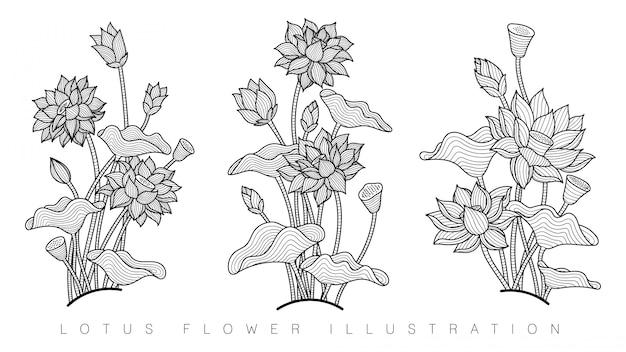 Bela flor de lótus