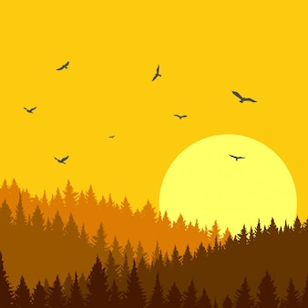 Bela floresta de pinheiros