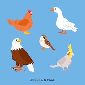 Bela mão desenhada coleção de aves