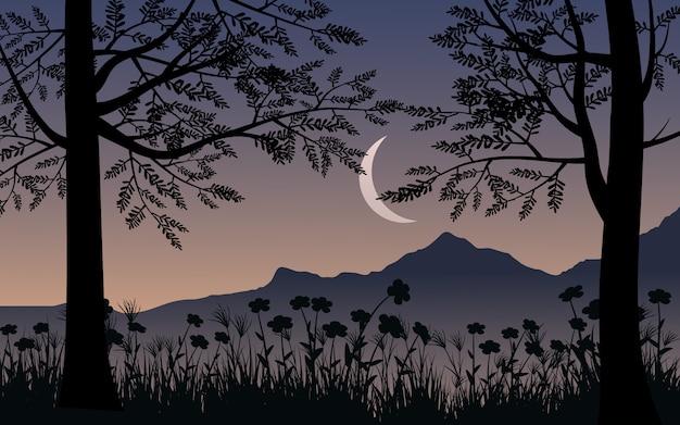 Bela noite com silhueta de árvore