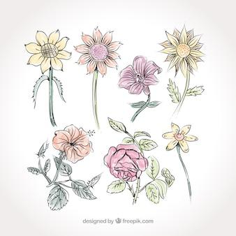 Belas flores pintadas à mão