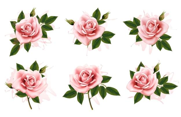 Belo conjunto de rosas rosa ornamentadas com folhas. vetor.