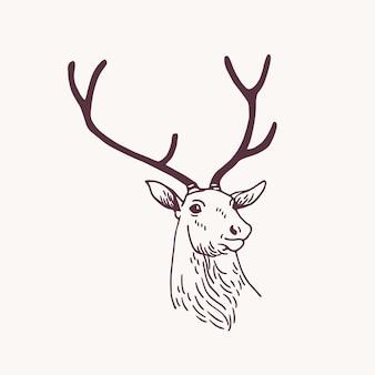 Belo desenho ou esboço de cabeça de veado macho, rena ou veado com chifres elegantes. animal da floresta desenhado com linhas de contorno sobre fundo claro. ilustração em vetor monocromático em estilo vintage.
