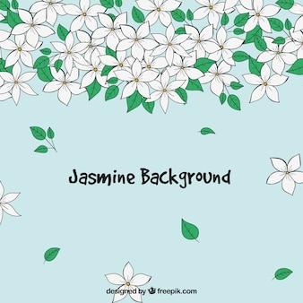 Belo fundo de jasmim