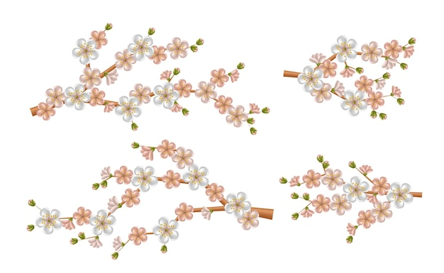 Belo ramo de sakura realista com flores desabrochando e botões. flor de cerejeira da primavera