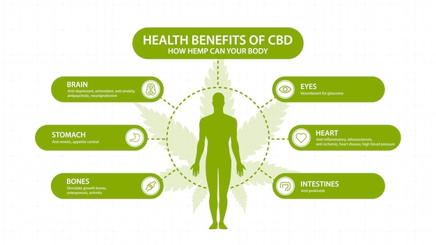 Benefícios do cbd do cânhamo para o seu corpo, com infográfico e silhueta do corpo humano. benefícios para a saúde do canabidiol cbd de cannabis, cânhamo, maconha, efeito no corpo
