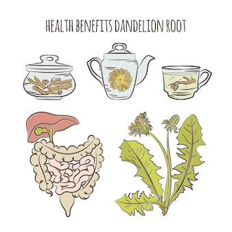 Benefícios do dente-de-leão farmácia planta médica botânica natureza saúde desenhado à mão