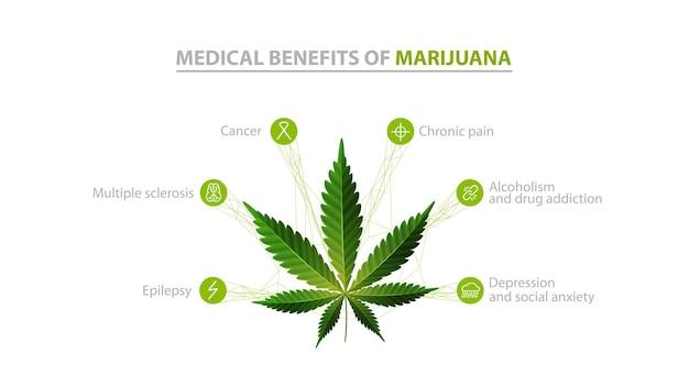 Benefícios médicos da maconha, informações brancas com ícones de benefícios e folhas verdes de cannabis