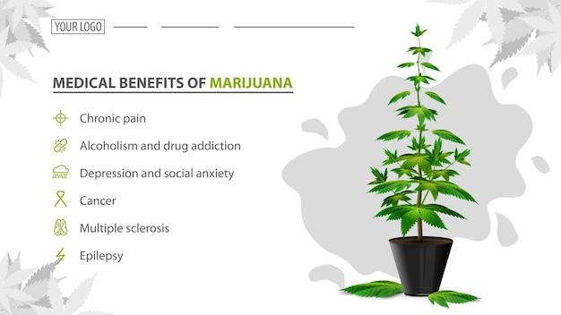 Benefícios médicos da maconha, pôster com arbusto de cannabis em uma panela