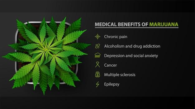 Benefícios médicos da maconha, pôster preto com arbusto de cannabis em uma panela