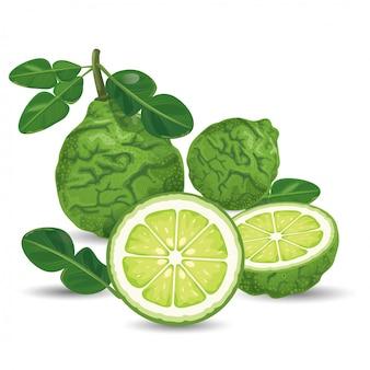 Bergamota verde fresca
