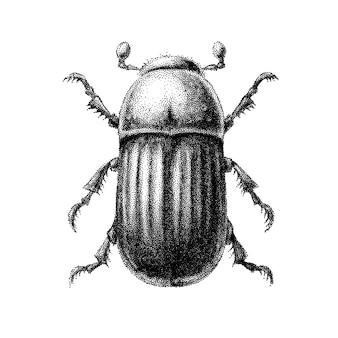 Besouro abstrato preto e branco desenhado à mão no estilo de gravuras vintage