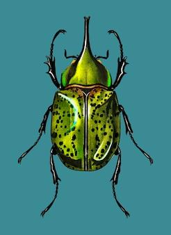 Besouro de hecules oriental (scarabaeus hyllus)