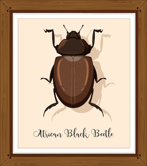 Besouro negro africano em moldura de madeira