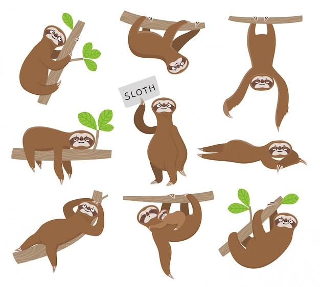 Bicho-preguiça. preguiças de animais bebê fofo pendurado no galho de árvore da floresta tropical. personagens engraçados