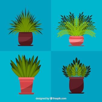 Bloco de quatro vasos com plantas decorativas