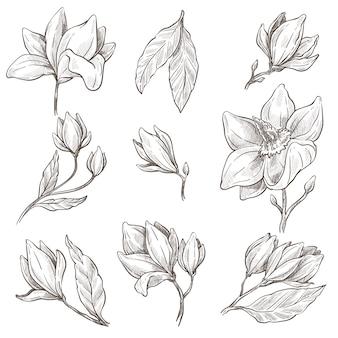 Blosom selvagem de flor de magnólia, esboços de plantas