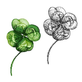 Boa sorte, trevo de quatro folhas. ilustração em vetor cor vintage incubação isolada em um fundo branco.