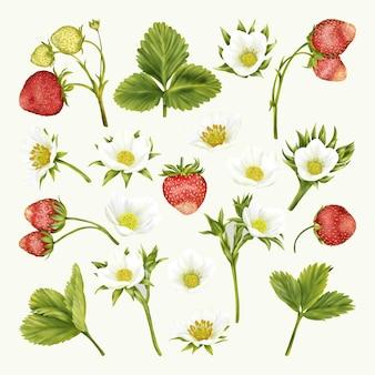 Boho de verão, morangos, flores brancas, folhas verdes