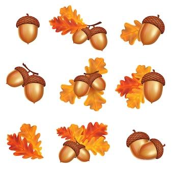 Bolotas isoladas com folhas de carvalho em fundo branco. ilustração vetorial de outono