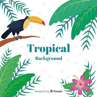 Bonito, tropicais, fundo