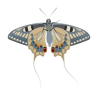 Borboleta com caudas isoladas em um fundo branco. veja de baixo. asas grandes com um belo desenho e caudas finas no dorso. vetor eps10.