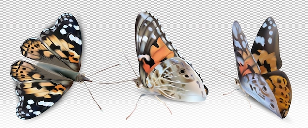 Borboleta monarca voadora amarela em fundo transparente