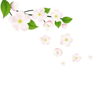 Borda de flores de macieira rosa,