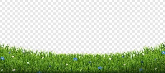 Borda de grama verde com flores isoladas