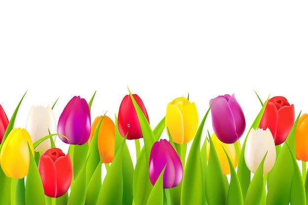Borda de tulipas coloridas com malha gradiente
