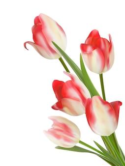 Bouquet de flores sobre fundo branco.