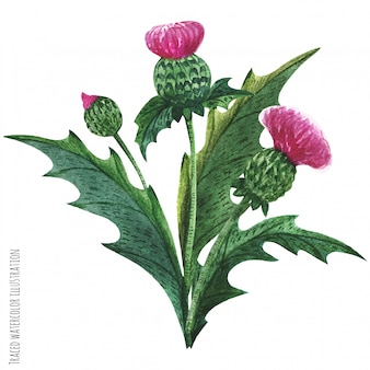 Boutonniere de plantas selvagens escocesas, buquê de cardo