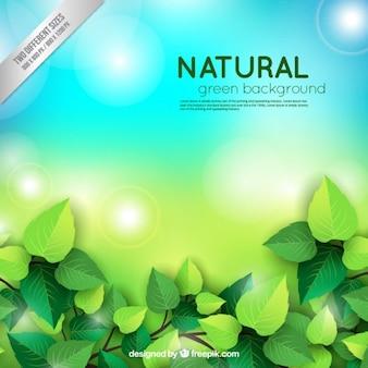 Brilhante fundo natural