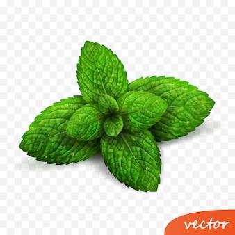Broto isolado 3d realista de folhas de hortelã fresca com gotas de orvalho