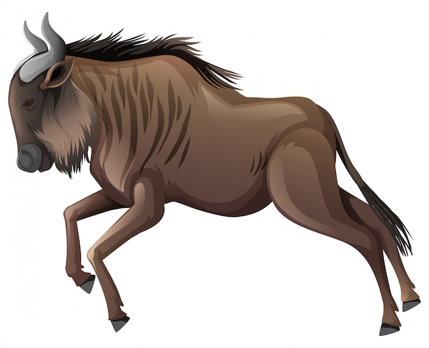 Búfalo-africano correndo em branco
